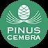 Pinus Cembra (Swiss Stone Pine)
