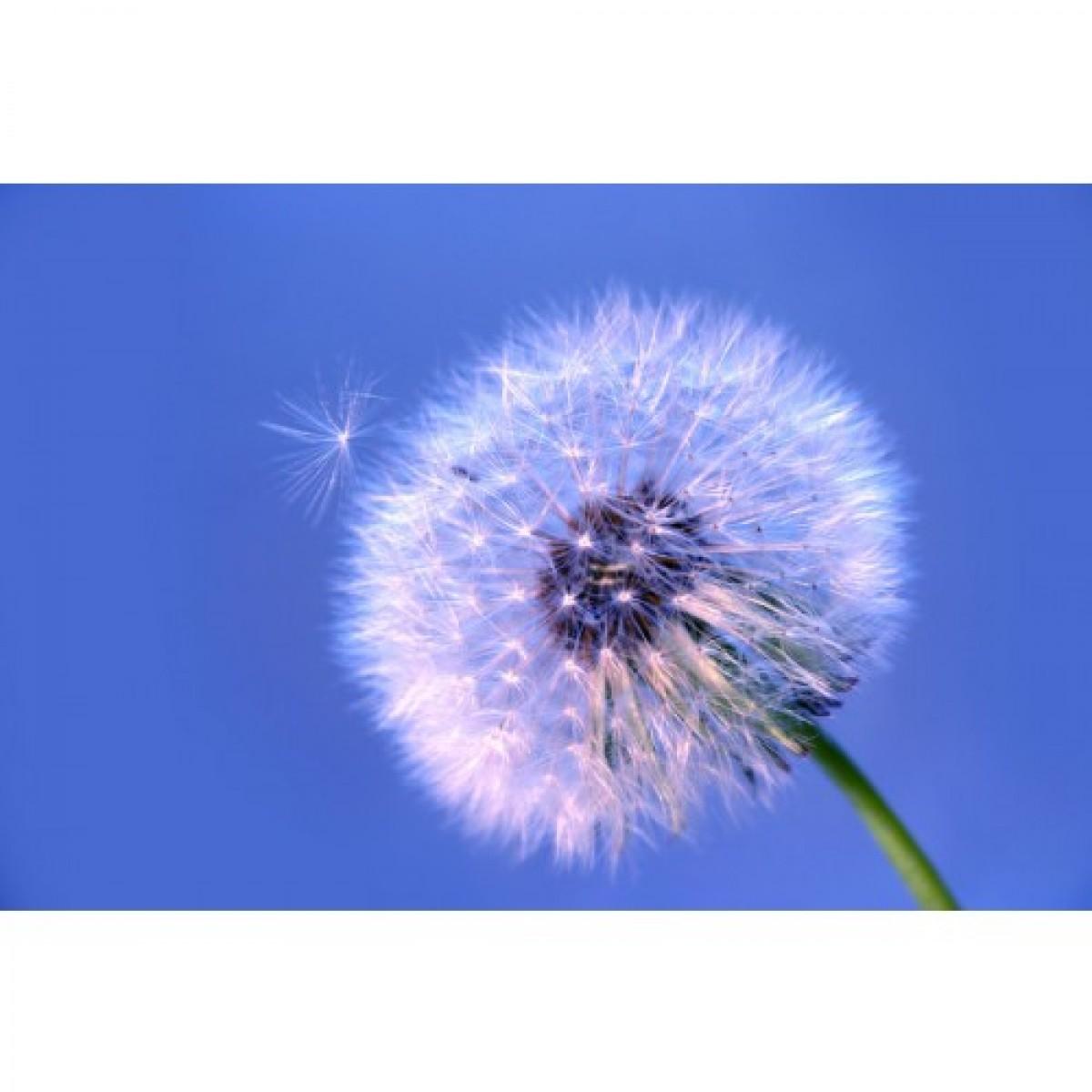 Dandelion Root Ground Powder Super Natural Powders
