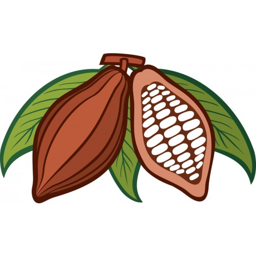 Organic Cacao Beans 500g Peruvian Raw Natural