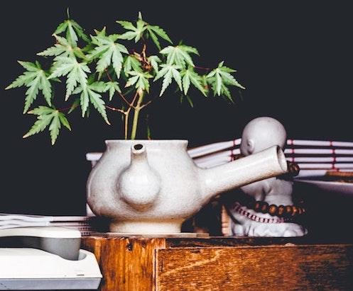how to make hemp tea