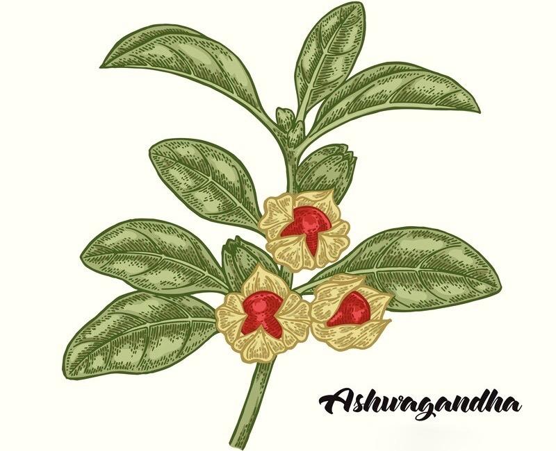 organic ashwagandha extract