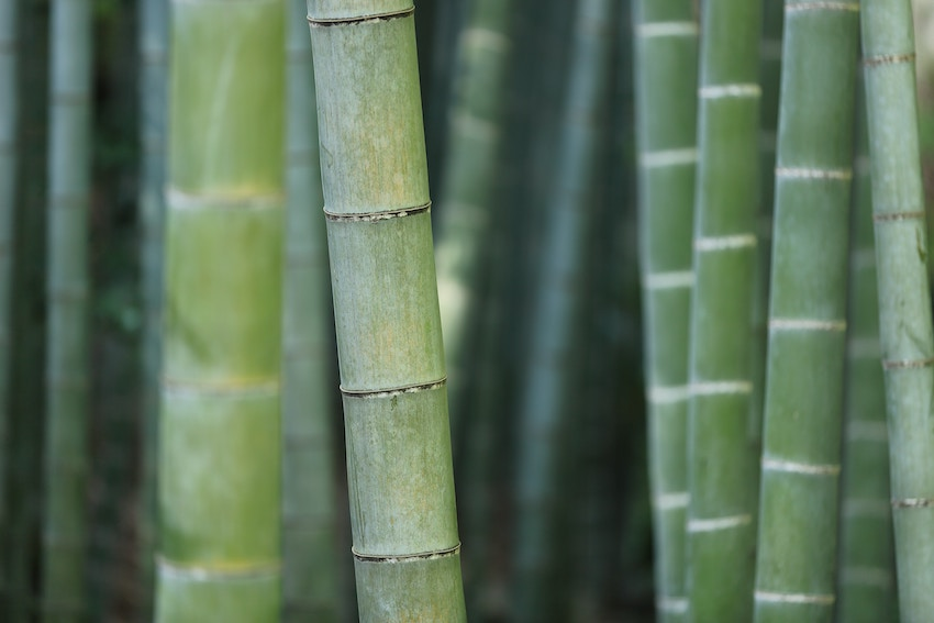 bamboo silica supplement