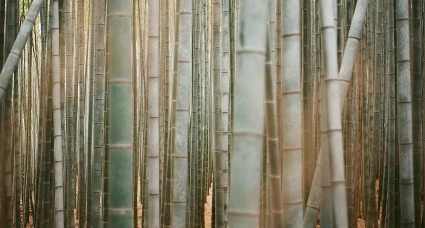 bamboo silica organic