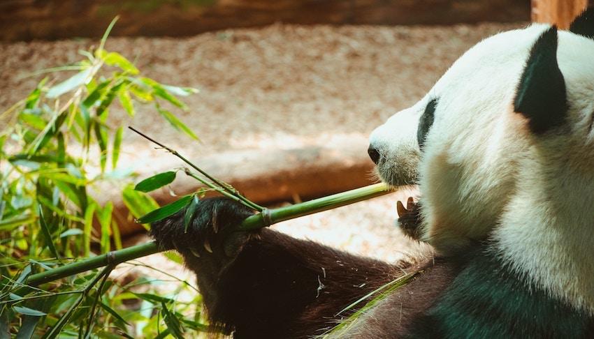 best bamboo silica supplement