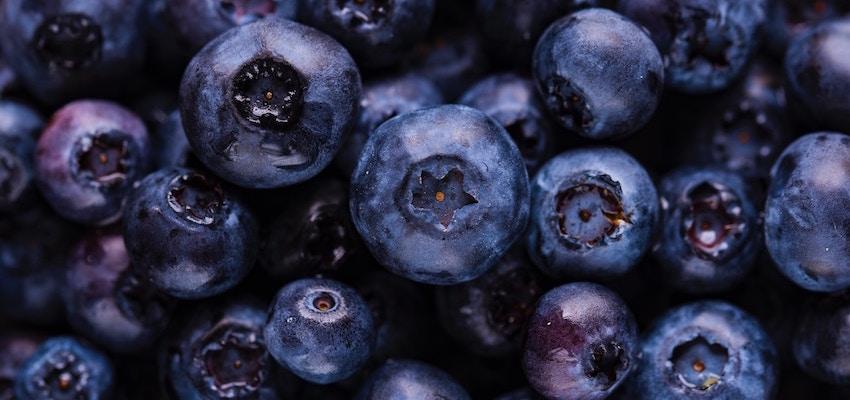 best organic blueberry extract powder
