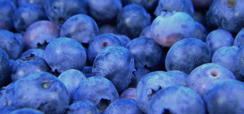 bilberry powder organic blueberry extract powder strong organic