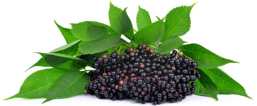 organic elderberry powder