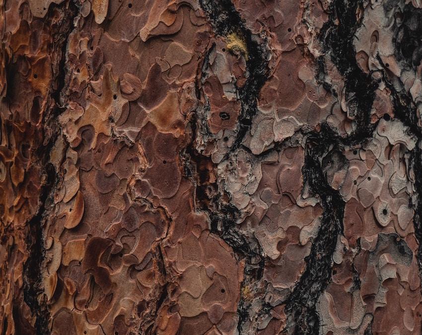 pine bark extract 10:1 ratio Powder