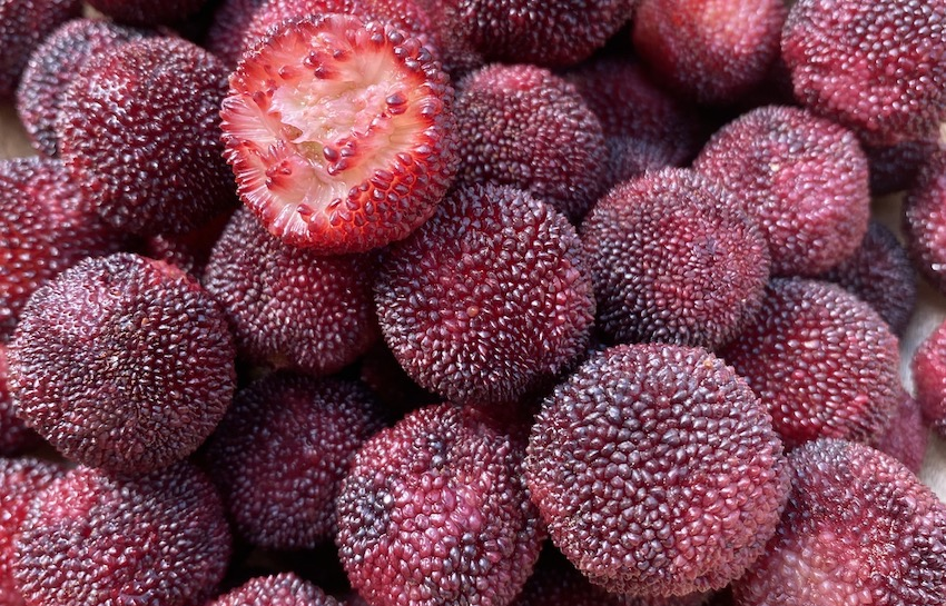 waxberry fruit england supply
