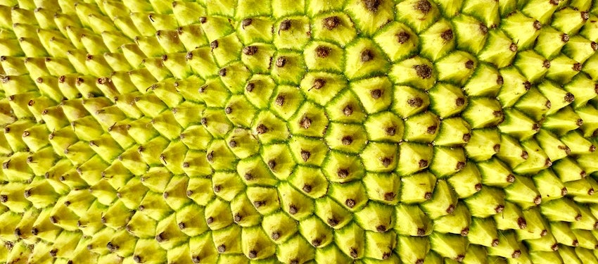 jackfruit smoothie jackfruit bubble tea, jack fruit health benefits