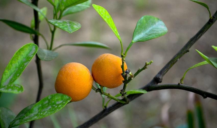 organic Liposomal vitamin c quality C non china vitamin c