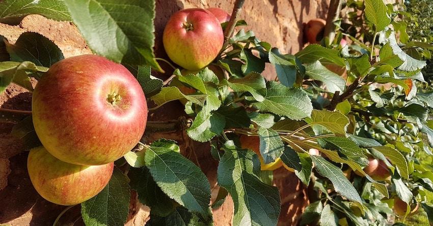 how much apple cider vinegar for weightloss