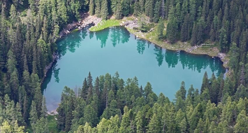 organic sulphur sulphur sourced from pine tree lignans