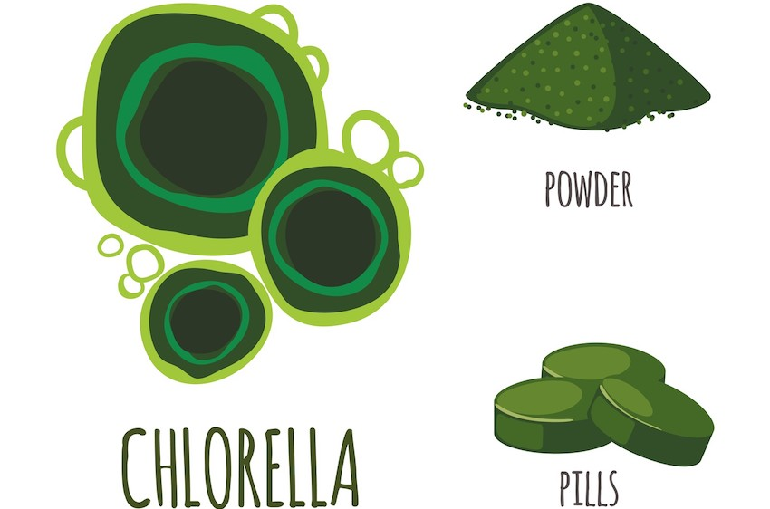 fermented chlorella benfits how to use