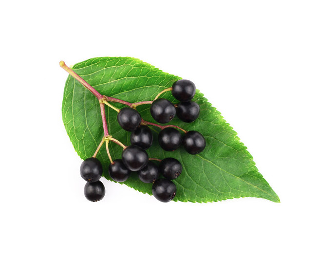 uk produced elderberry seed oil