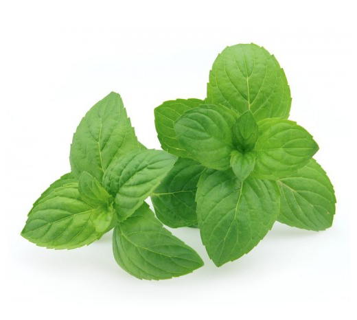 organic peppermint essential oil from england