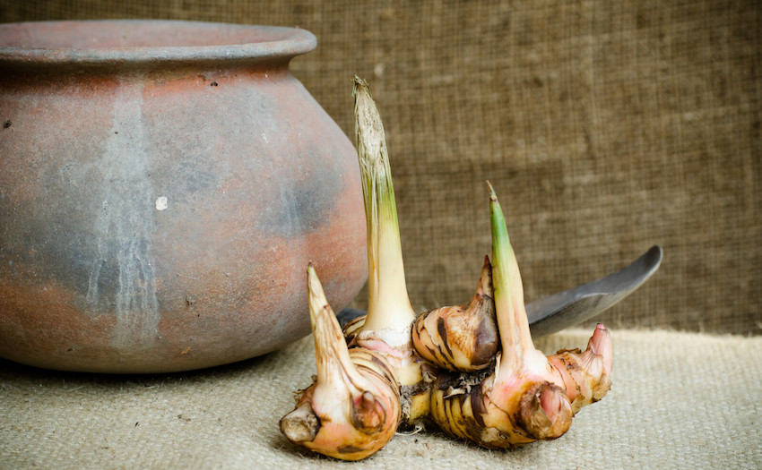 how to use galangal essential oil