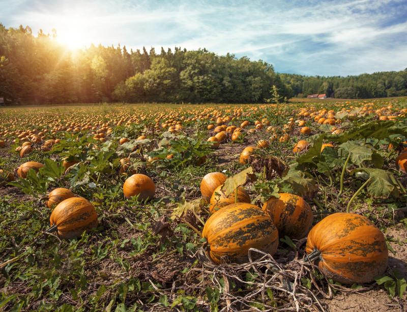 styrian pumpkin seeds benefits