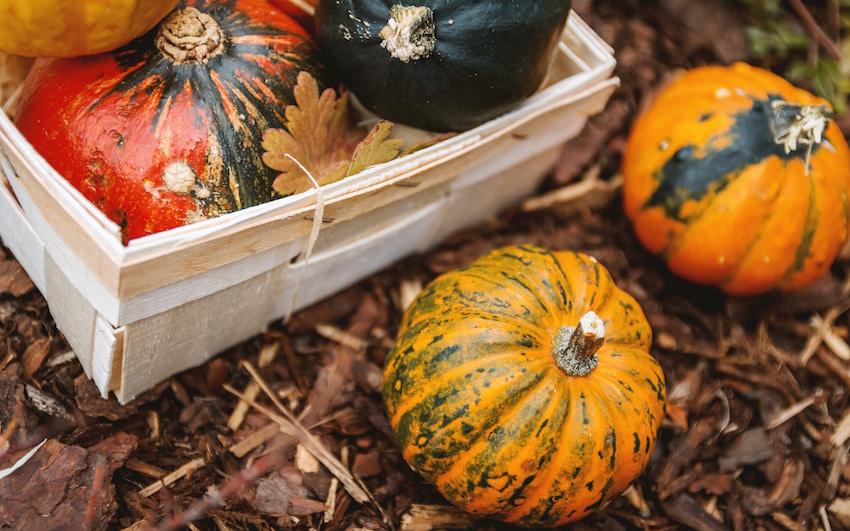 Styrian Pumpkin organic