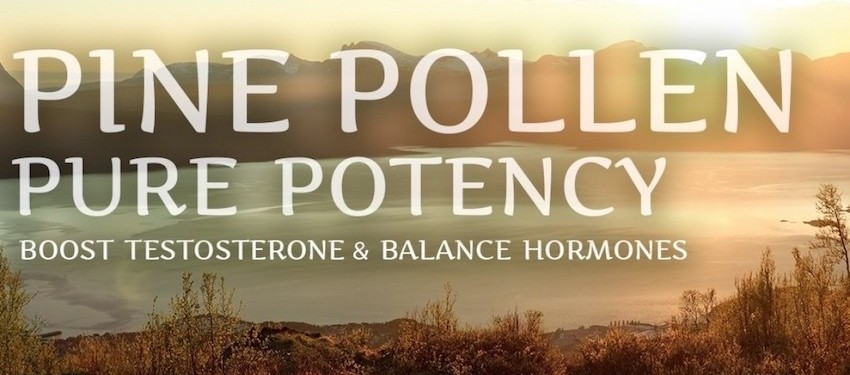 buy surthrival pine pollen tincture pure potency