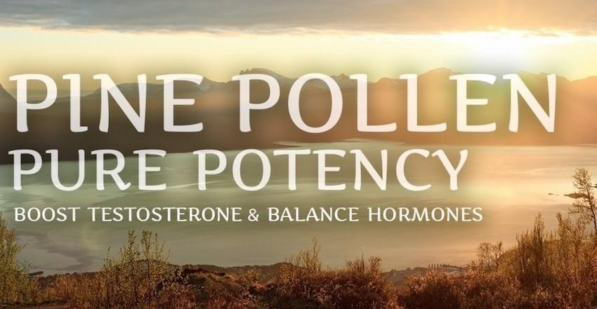 pine pollen doage men