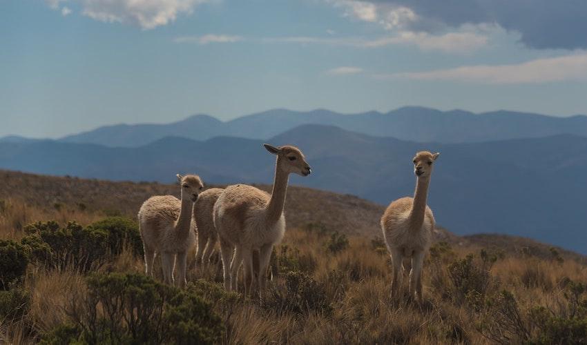 Bombillas straw natural handmade in Argentina