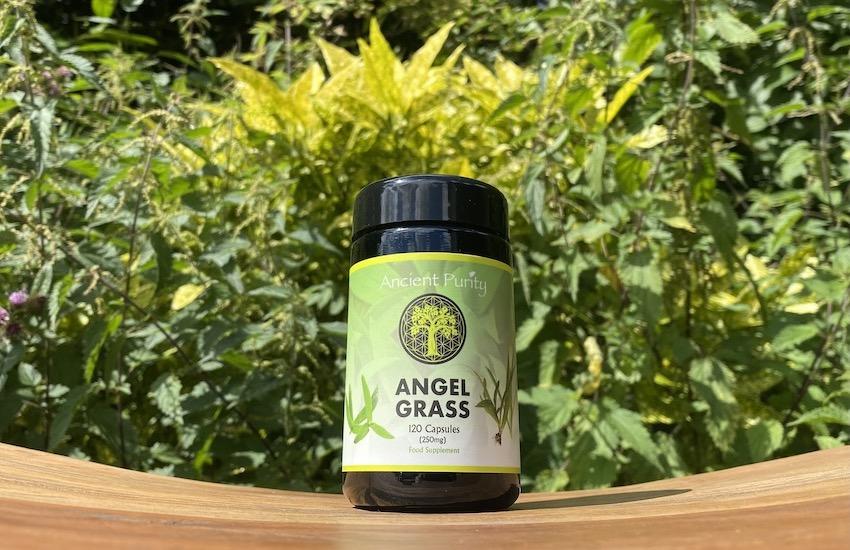 angel grass for immune health, Thai angel grass supplement, rare supplements