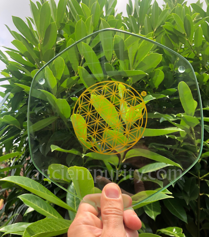 natures design UK plate flower of life