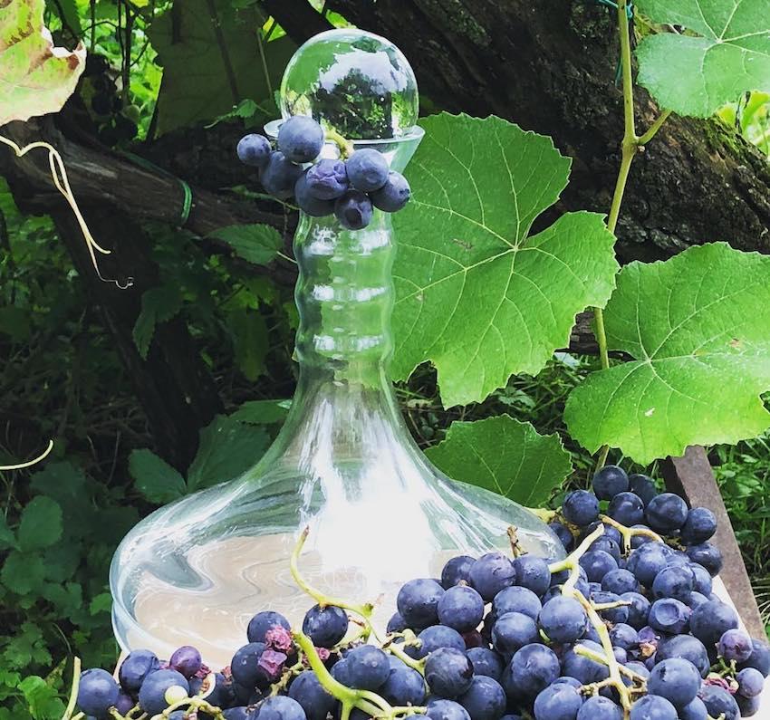 natures design wine carafe