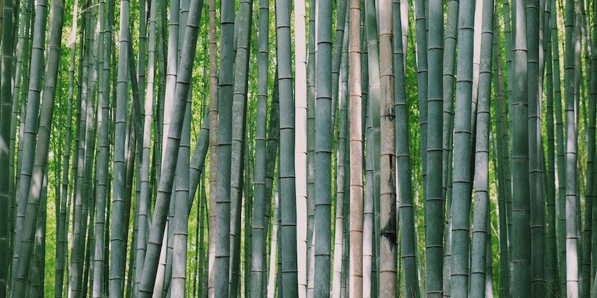 organic_cotton_buds_bamboo_eco_UK