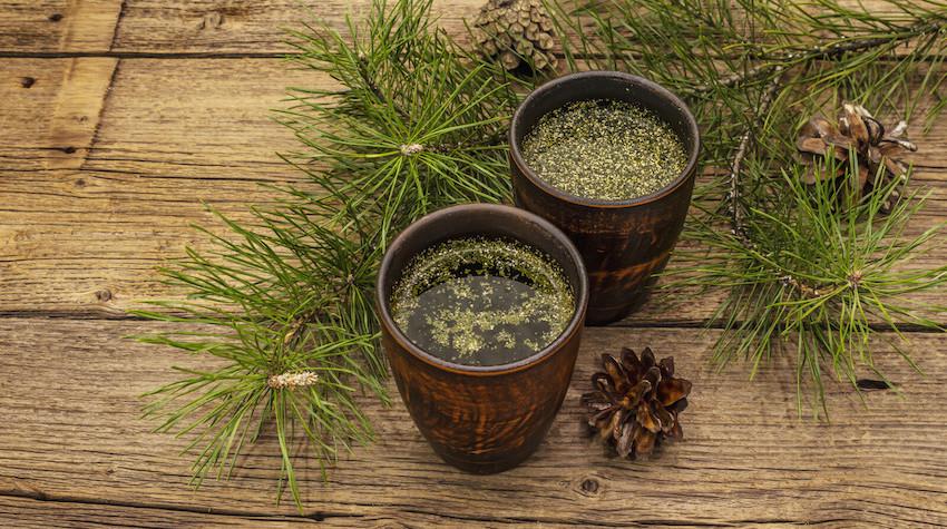 spike proteins and shedding , pine tea, pine oil tea, pine needle tea for vid
