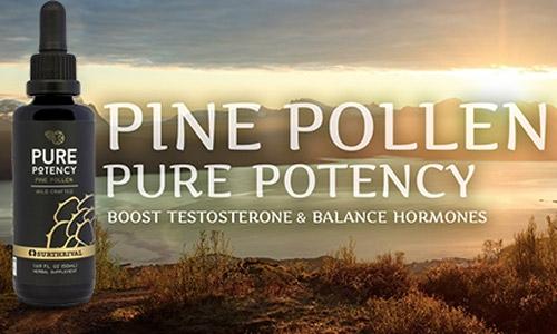 Pine Pollen - Pure Potency